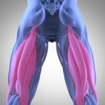 Pulled Hamstring – Causes, Symptoms, And Treatment