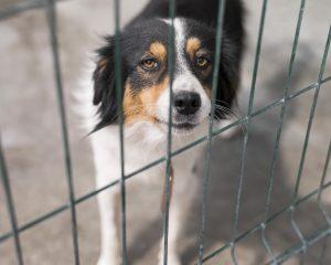 dog run fence Calgary