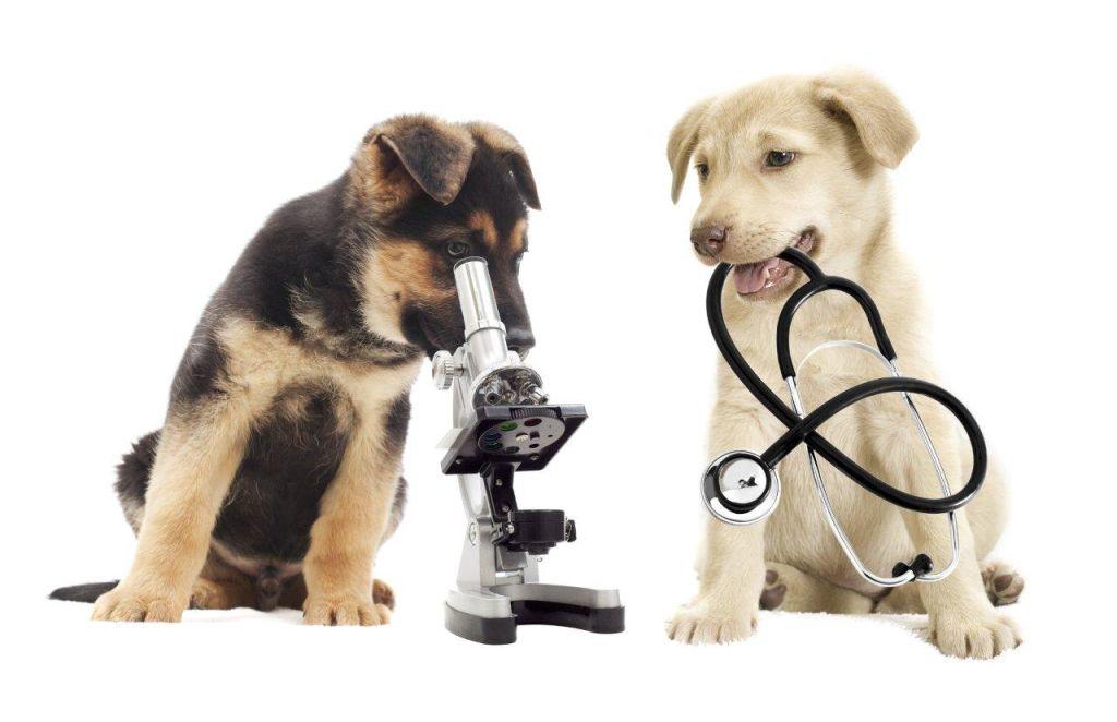 Veterinary Diagnostics Market