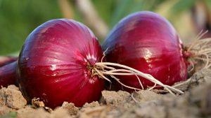 Indian Onion Powder Market Analysis